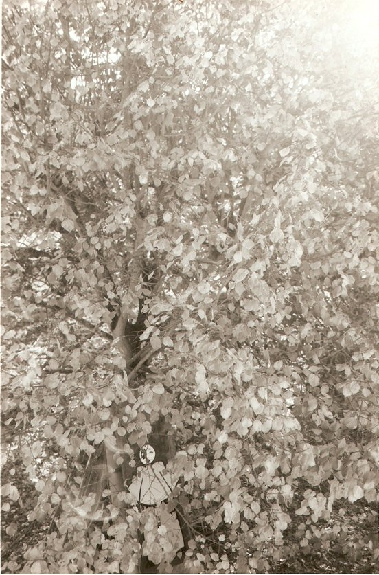 in da tree 1997 3 web